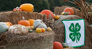 Squash and pumpkins on hay bales, with the 4-H banner.