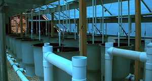 Photo of a large, barnlike structure from the inside. Rows of gray, barrel-like tanks and white pvc piping, dim, blue light from the ceiling panels, and a large fan set in the wall at the end of the barn, through which daylight shines.