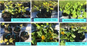 The different potting medium treatments tested in the study. Credits: Marie Dorval, UF/IFAS