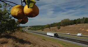photo of traffic on the interstate showing a semi, a branch with citrus fruit hanging from it is in the foreground.