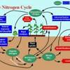 The nitrogen cycle depicted in this figure illustrates the inputs, components, transformation processes, and losses of nitrogen that would be accounted for in a soil system nutrient budget.