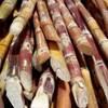 Cut sugarcane.