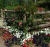 A garden.