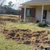 Rooting and wallowing in a yard by wild hogs.