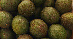 Avocado. UF/IFAS File Photo by Thomas Wright