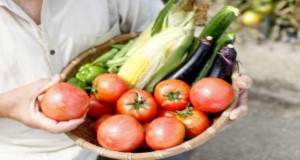 A person holding a basket of tomatoes, eggplants, bell peppers, and corn. Credit: kazoka30/iStock/Thinkstock.com