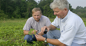 This image was taken prior to national guidelines of face coverings and social distancing. Two professors check soybean plants for Asian soybean rust.