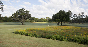 Photo of a golf course with wildflower planting.