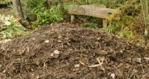 Compost pile without receptacle. Credits: Tiare Silvasy, UF/IFAS